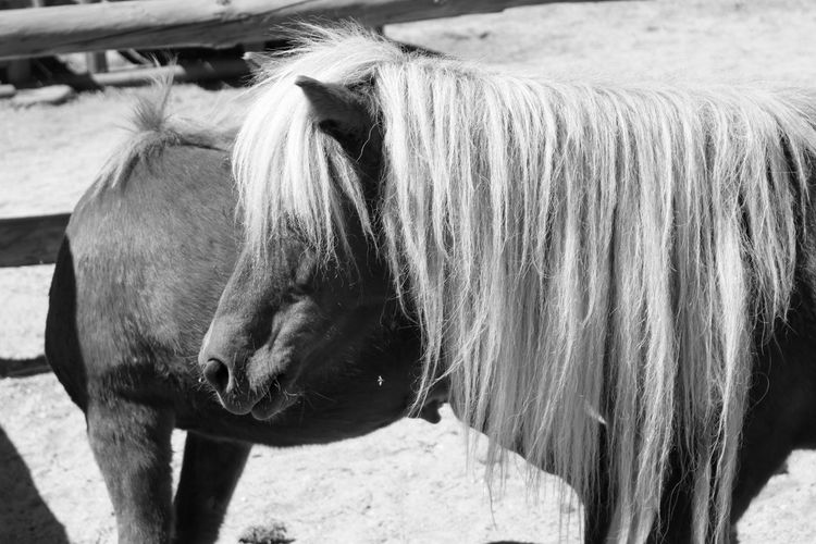Ponies standing on field