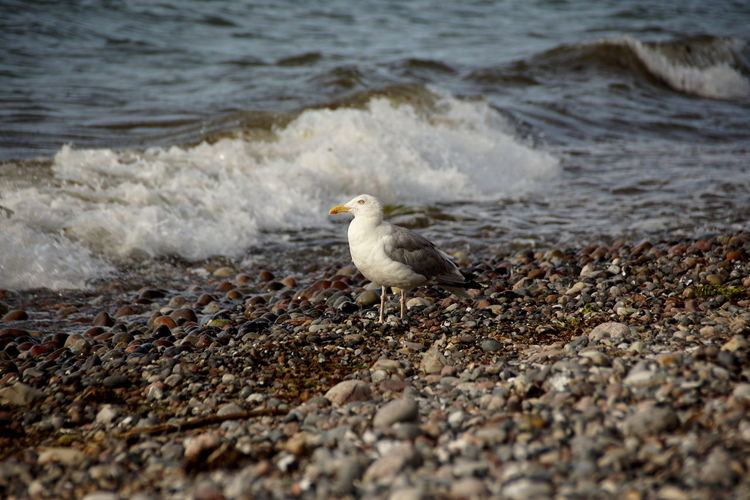 High angle view of seagull on beach