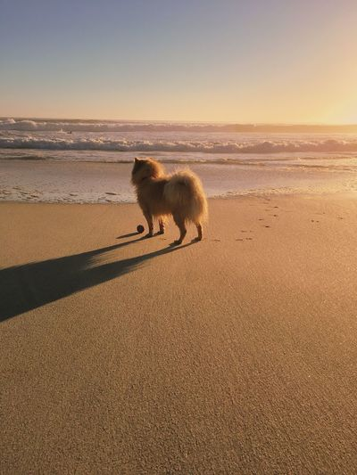 Pet Portraits Animal Themes Beach Beauty In Nature Day Dog Domestic Animals Full Length Horizon Over Water Mammal Nature No People One Animal Outdoors Pets Sand Scenics Sea Sky Sunset Water