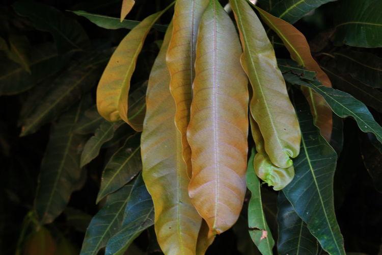 Full Frame Shot Of Long Leaves