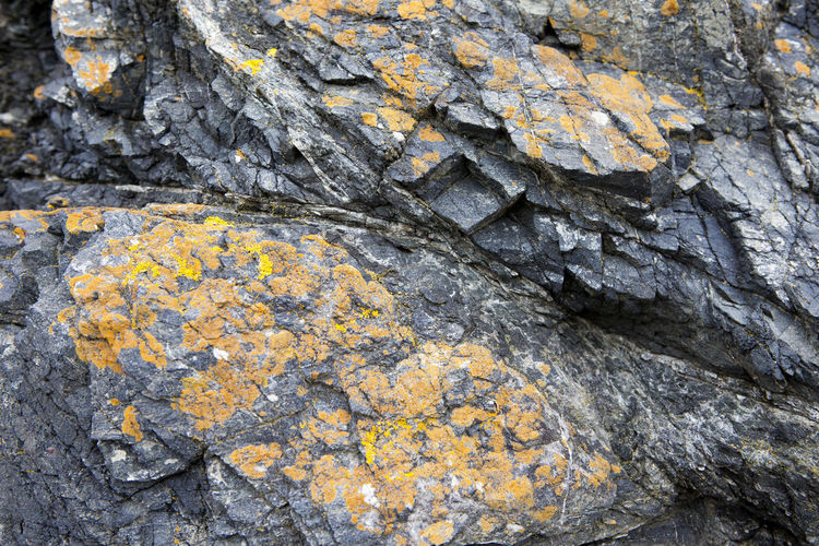 Orange Rock Face Day Gray Grey Lychen Nature No People Outdoors Rock - Object Rocks Stone Textured