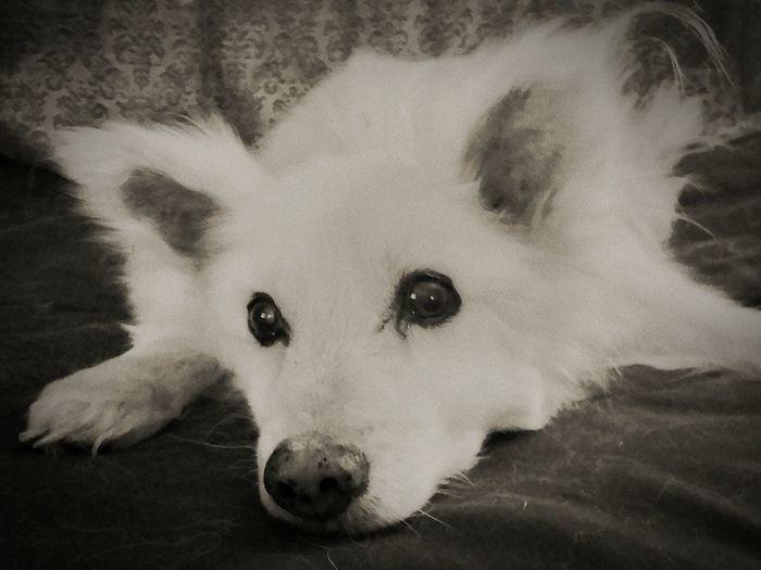 Dogslife Dogoftheday DogLove Dog❤ Doggie Dog Dogstagram Dog Love Dogs Of EyeEm Doglover Relaxing Adorable Dog Adorable Enjoying Life Dog Sleeping  Doglife Dog Days