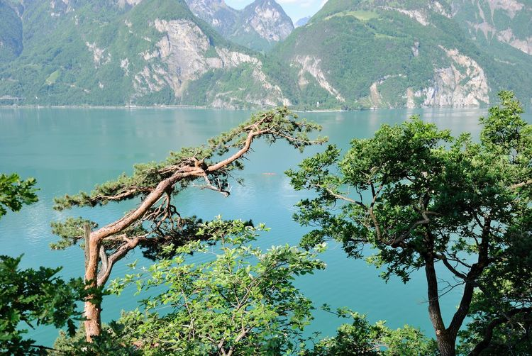 Beauty In Nature Day Growth Lake Landscape Mountain Nature No People Outdoors Reservoir Sky Tree Water
