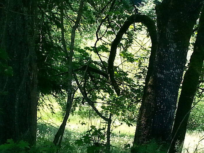 Heart In Nature Heart Shapes In Nature Hearts Founf In Trees