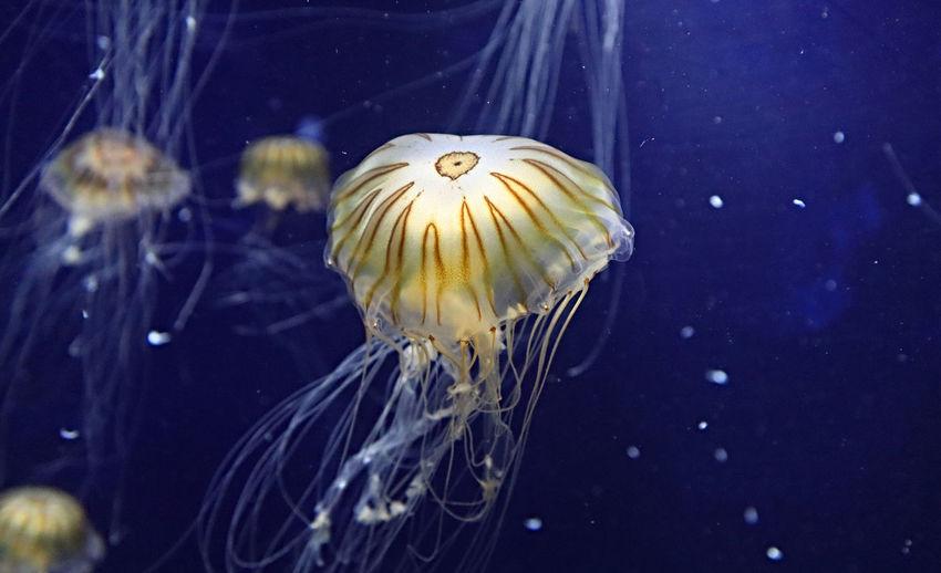 Jellyfish Water