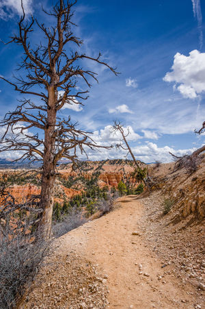 Bare Tree Beauty In Nature Blue Bryce Canyon Cloud - Sky Day Dead Tree Desert Landscape Leading Lines Nature No People Outdoors Pathway Sand Sand Dune Scenics Sky Tree Tree Trunk