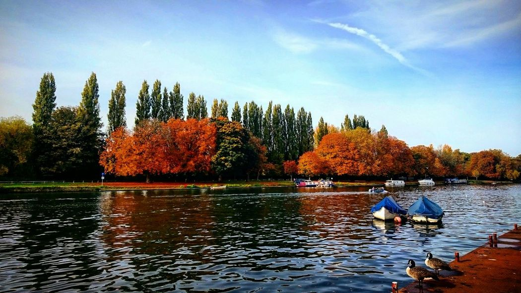Autumn Autumn Colors Autumn Leaves Autumn🍁🍁🍁 River Riverside River Thames Riverwalk River Side Riverthames Riverside Photography Thames Thamesriver Thames River Thamespath Thames Path Thames River Side Boat Boats Boats⛵️ The Great Outdoors - 2016 EyeEm Awards