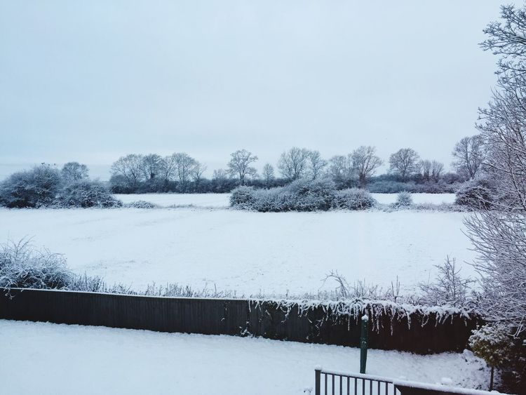 Snow in the fields of Northamptonshire Snow Snowing Snow ❄ Snowy Cold Weather Winter Winter Wonderland Northampton Northamptonshire Northants Uk United Kingdom Street Road Lane Cul De Sac Trees And Sky Trees And Bushes