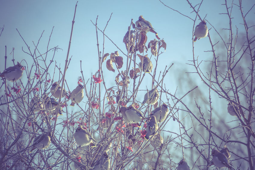 Bare Tree Beauty In Nature Branch Close-up Cold Temperature Day Dead Plant Dry Focus On Foreground Growth Nature No People Outdoors Plant Sky Tranquility Tree Vulnerability  Water Waxwings Winter