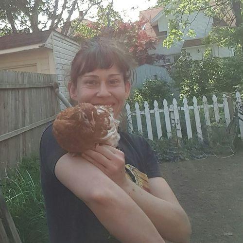 Urban Farm Urban Chickens Chicken