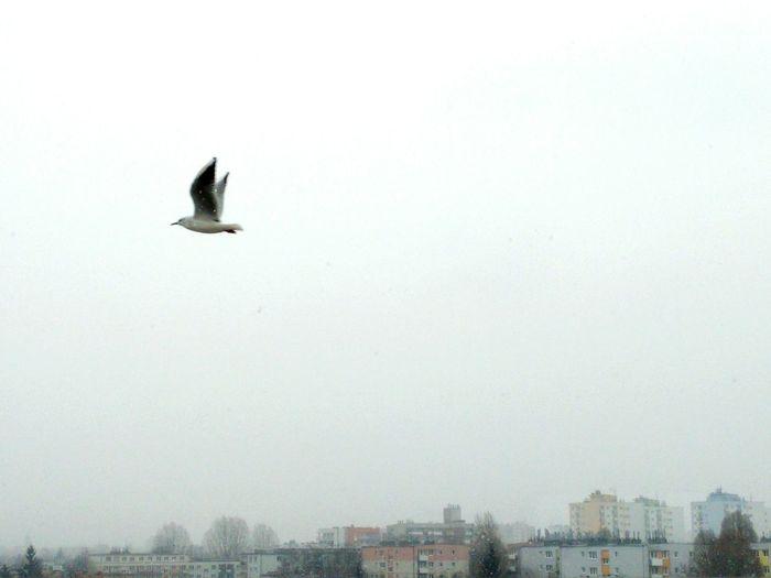 Birds_collection Fly Sky