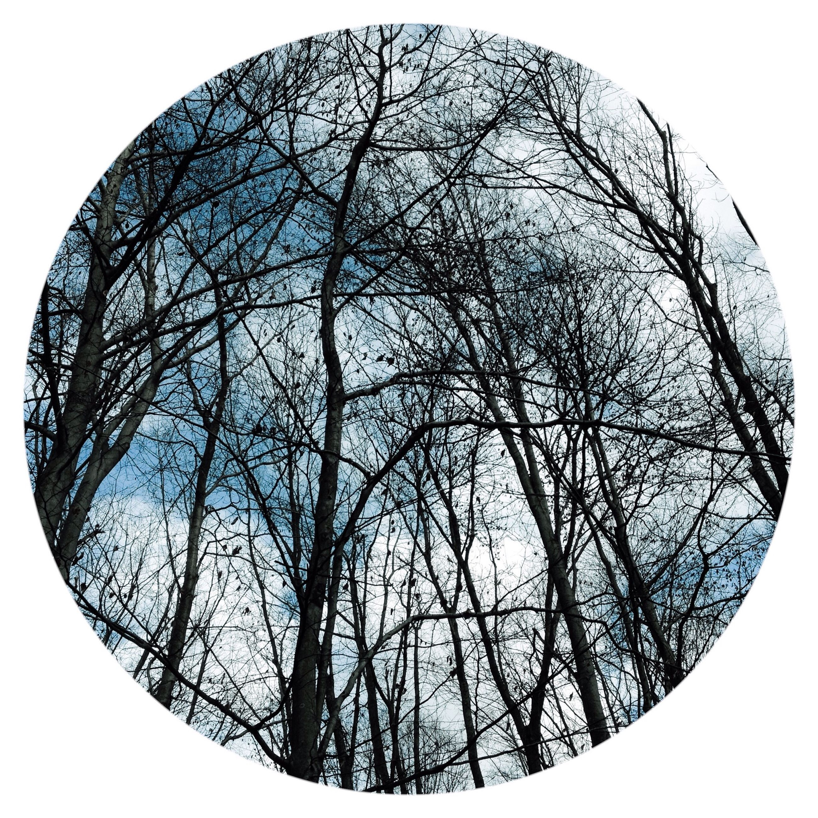 low angle view, bare tree, tree, clear sky, branch, sky, day, nature, no people, circle, outdoors, tranquility, auto post production filter, pattern, geometric shape, copy space, silhouette, directly below, high section, beauty in nature