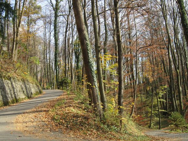 Autumn Beauty In Nature Day Forest Landscape Nature No People Outdoors Road Scenics Tree