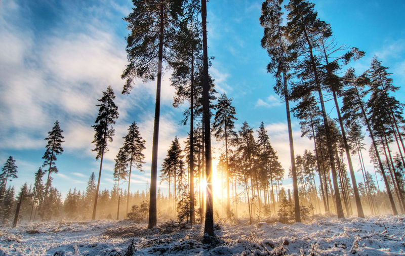 Nordbymoen, a small forrest near Jessheim, Norway Beauty In Nature Cold Temperature Day Forest Frost Frozen Landscape Nature No People Outdoors Pine Tree Scenics Sky Snow Sunset Tranquil Scene Tranquility Tree Weather Winter