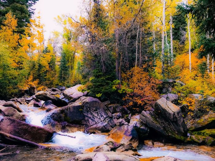 Lost In The Landscape EyeEm Vision Autumn Nature Tree Scenics Beauty In Nature Tranquil Scene Rock - Object Forest Tranquility Landscape Outdoors No People River Sunlight WoodLand Leaf Day Travel Destinations Sky Sunset
