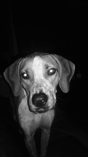 My Dog I Love My Dog Black & White Togetherness B&w Photography Monochrome HoundDog Family The OO Mission Black And White
