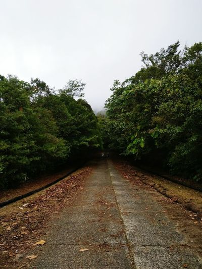 check out - to summit gunung serapi 31 August 2018 Year Road Heading To Summit Hiking Tire Track 90 Degrees Check This Out! Merdeka Day Celebration Pretty♡ Nice Weather Almost Rain But No Rain Tree Water Sky Growing Blooming Plant Life Foggy