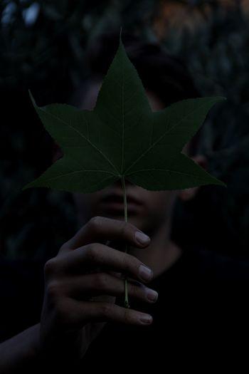 Close-up of boy holding leaf over face