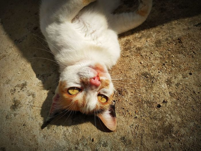 High angle portrait of cat relaxing outdoors