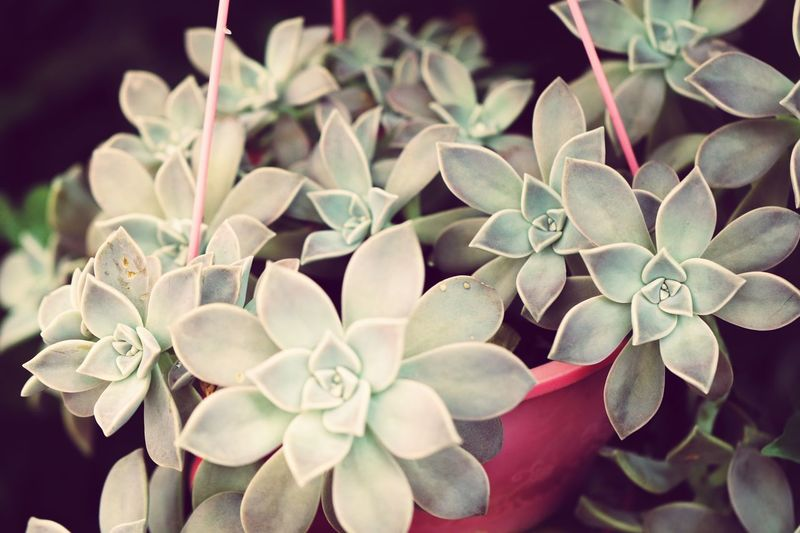 Planta Flower