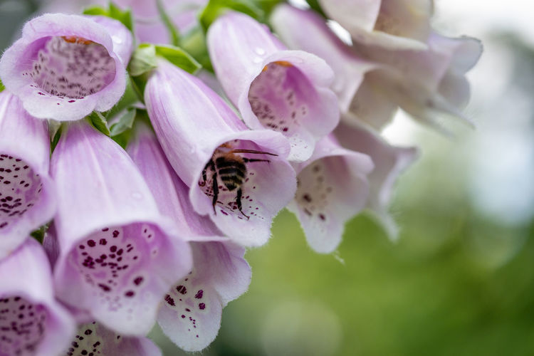 walk in the park in spring Flowers,Plants & Garden Beauty In Nature Bee Close Up Growth Insect No People One Animal Purple
