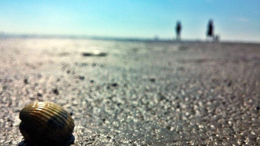 Shell Shell