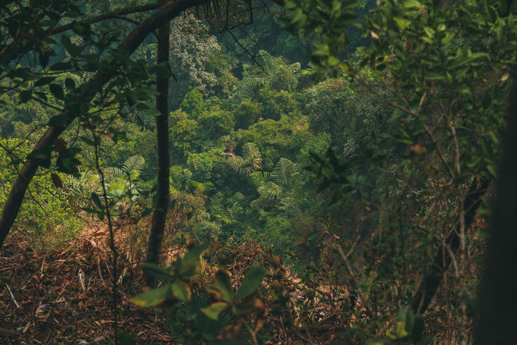 Lush mountains of Meghalaya ... Nature Beauty In Nature Mountains Cherrapunji Northeastindia Travel Destinations Travel Meghalaya Looking Down Exploring Tree Forest Leaf Plant Green Color Close-up Lush - Description Thick Growing Young Plant Branch Leaves Fern Lush Foliage Greenery