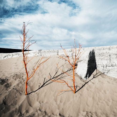 Bare tree on sand land against sky