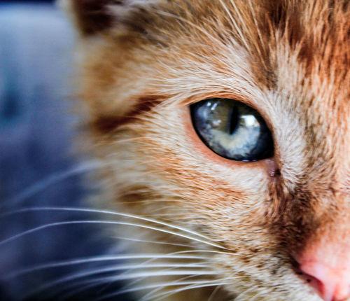 Kitty Miț Garfield PF First Eyeem Photo