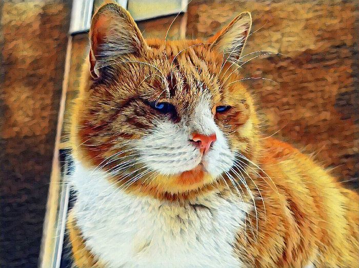 which one the best Picsart Eyes Cat Reedited