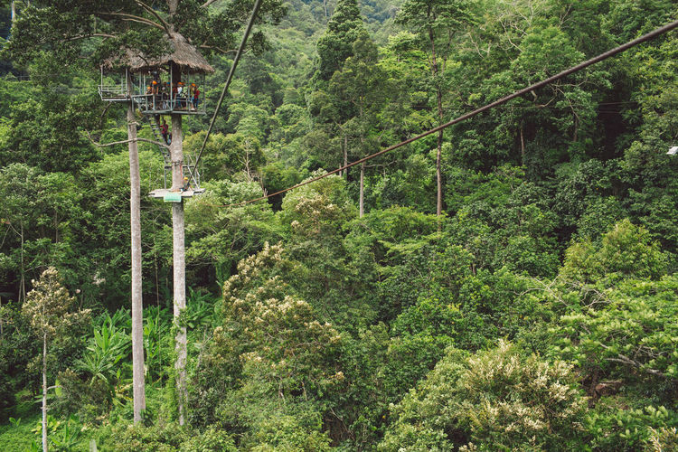 Tree Plant Forest Land Green Color Connection Foliage Growth Lush Foliage Day Cable Nature Rope No People Beauty In Nature Rope Bridge Transportation Scenics - Nature Outdoors WoodLand Rainforest Bridge - Man Made Structure