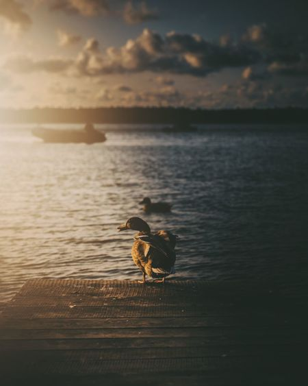 View of bird in sea against sunset sky
