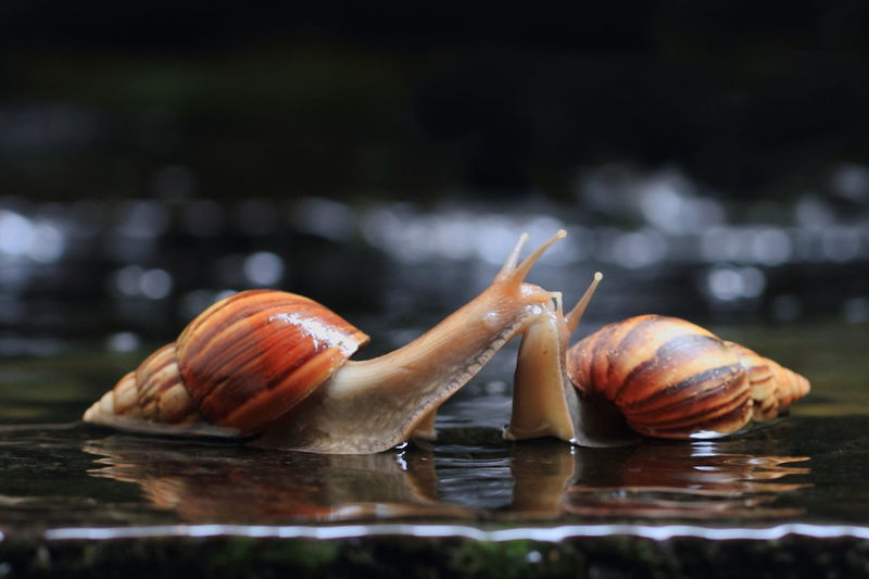 Snail on water