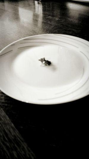 Eating Eat Meal Poor  Teller Blackandwhite Beautiful Sad Monochrome