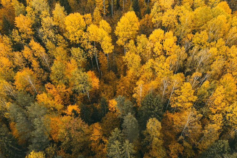 Full frame shot of trees