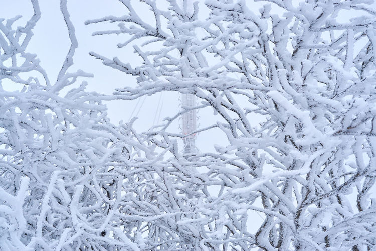 Backgrounds Beauty In Nature Close-up Cold Temperature Day Frost Frozen Full Frame Ice Nature No People Outdoors Snow Snowflake Tranquility Tree Weather White Color Winter