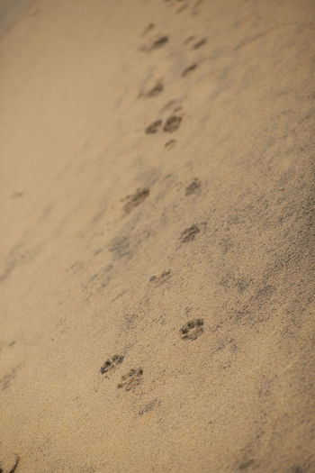 Beach Photography French Guiana, South America Close-up Day Dog Footprints In The Sand FootPrint Nature No People Outdoors Sand