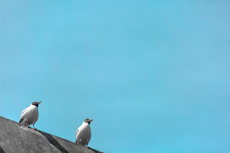 Low Angle View Of Birds Perched Against Clear Sky