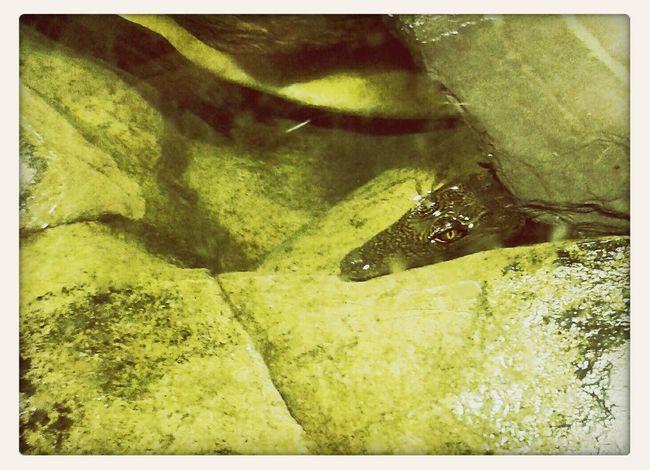 the liquid zoo Crocodile Aquarium