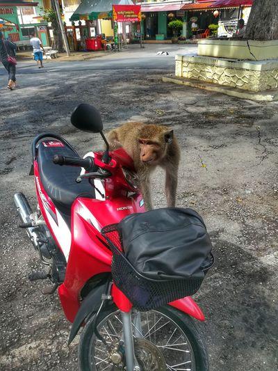 Monkey Street Land Vehicle Monkey One Animal Outdoors EyeEm Thailand Huaweiphotography Huawei Collection