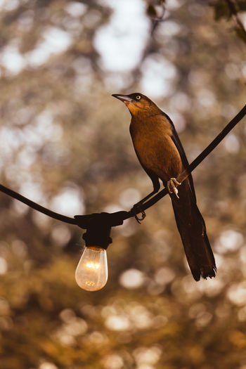 Austin, TX Texas Lamp Light Bulb Birds Wire EyeEm Selects Bird Animal Wildlife Focus On Foreground Hanging No People Outdoors Nature Animal Themes Tree Day EyeEmNewHere