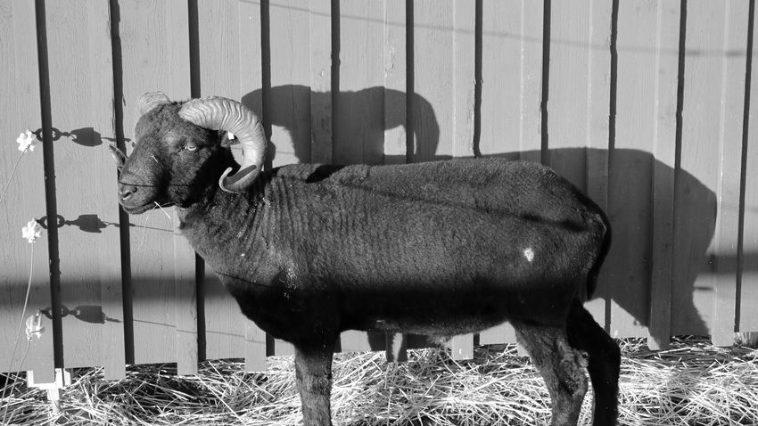 EyeEm Selects Animal Themes Animal Mammal Vertebrate Domestic Animals One Animal