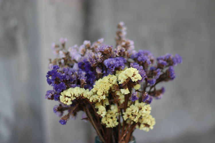 Animal Themes Animals In The Wild Beauty In Nature Blooming Close-up Day Flower Flower Head Focus On Foreground Fragility Freshness Growth Insect Nature No People One Animal Outdoors Petal Plant Pollination Purple