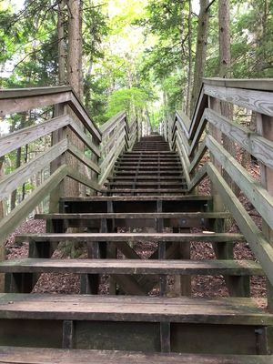 Staircase Architecture Steps And Staircases Built Structure Day Railing Low Angle View No People Tree Outdoors Nature Wood - Material Direction