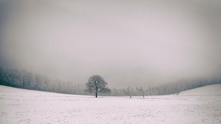 Winter Tree Bare Tree Beauty In Nature Cold Temperature Day Field Frozen Landscape Nature No People Outdoors Scenics Snow Snowing Tranquil Scene Tranquility Tree Weather White Color Winter
