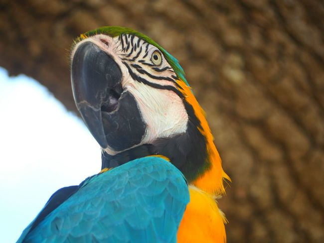 Animal Parrot Bird Animal Wildlife Animals In The Wild One Animal Blue Feather  Beak Macaw Close-up Gold And Blue Macaw Animal Themes Day No People Nature Multi Colored Portrait Outdoors Pets