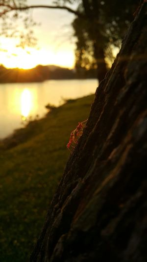 Ants Teamwork Sunset Enjoying The View Mobile Photography Peaceful View Relaxing Enjoying Nature Fastingmonth Ramadan