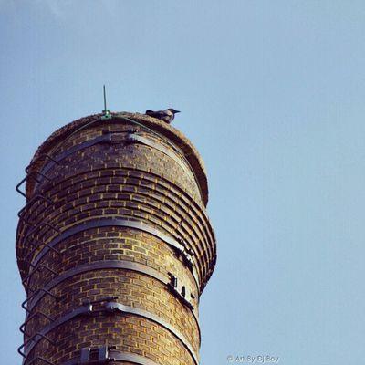 The Watcher Newyork Uptown Instagramuptown Inwood washingtonheights nyc city birds smokestack