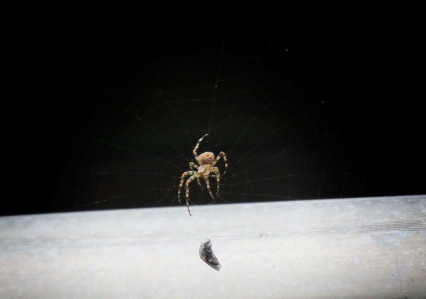Spider Spider Webs Spider Nature_collection Eyenaturelover Spiderworld Summer Time  Capture The Moment