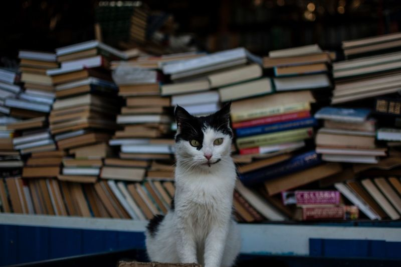 Book One Animal Pets Sitting Cat Outdoors No People The Street Photographer - 2017 EyeEm Awards